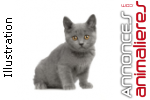 A reserver 6 chatons chartreux loof