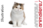 Bb exotics shorthairs a naiitre